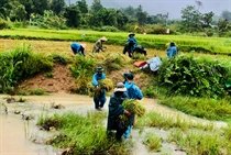 BĐBP Thừa Thiên Huế kêu gọi, hướng dẫn 2.062 phương tiện, 11.350 lao động vào tránh bão an toàn
